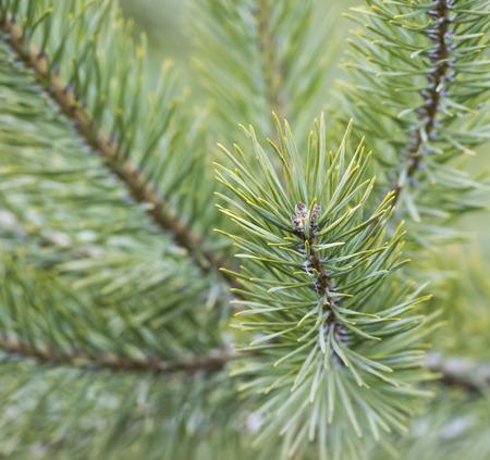 Needles on Trees