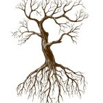 Advantages of Planting Bare Root Trees