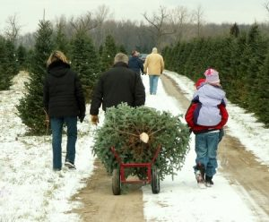 Shortages Expected to Cause Bump in Christmas Tree Prices