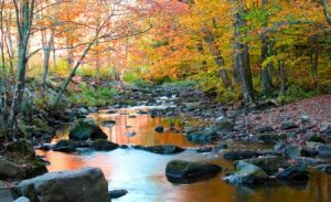 Michigan DNR Finds Our Forests Are Getting Older, Larger