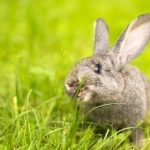 Tips on Attracting Bunnies