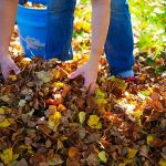 Cleaning Leaves Out of Garden
