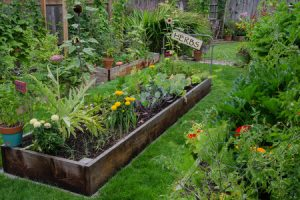 Tips for Creating A Sensory Garden