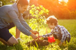 - boy and man planting seedling