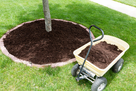 yellow metal wheelbarrow full of organic mulch from the nursery standing alongside a round flowerbed around a sapling