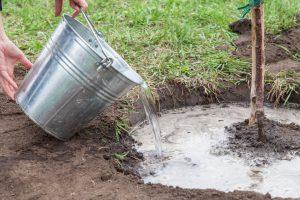 Winter Planting and Gardening