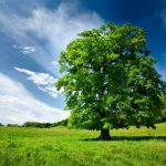 planting oak trees on your property