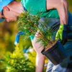 Tree planting supplies
