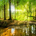 preserving and protecting trees